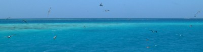 Birds flying over the reefs in Aves de Barlovento