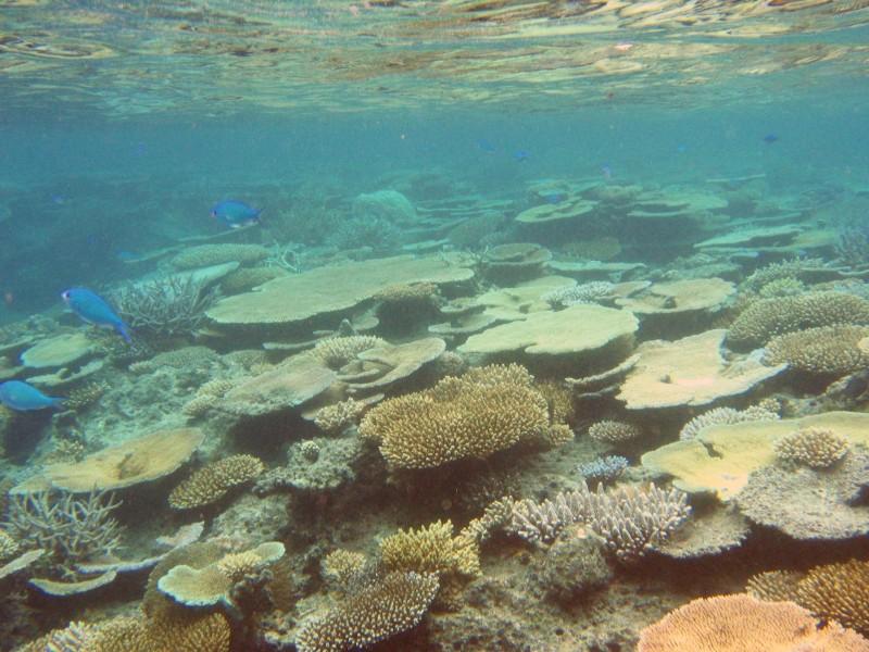Snorkeling From Beach Bounty Island Treasure Island Fiji