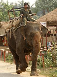 Make way for elephants in Sauhara