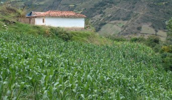 Corn and Andean house near Los Nevados
