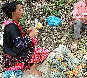 Hill tribe woman selling pineapples on the roadside