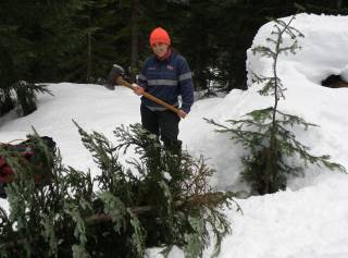 LJ slays a wild Christmas tree in the Cascades