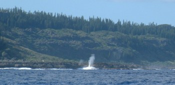 Blowhole on Mare, New Caledonia