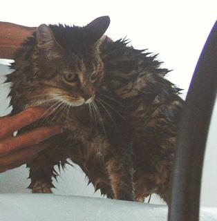 Arthur the Punk Kitty after a bad sail in Tonga