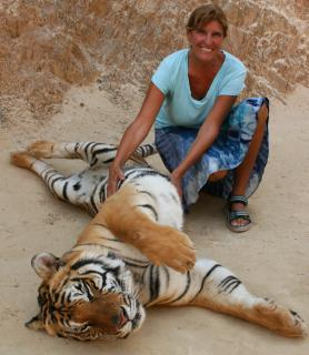 At the Tiger Temple, Thailand. Tummy scratch for the tiger.