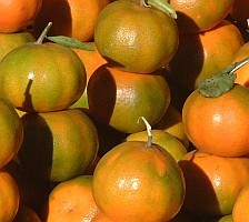 Timor, Indonesia is fairly dry, but they grow nice oranges