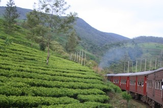 Tea fields, hills and the train to Haputale