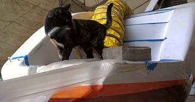 "Turtle, the boatyard kitty, surveying ""her"" domain"